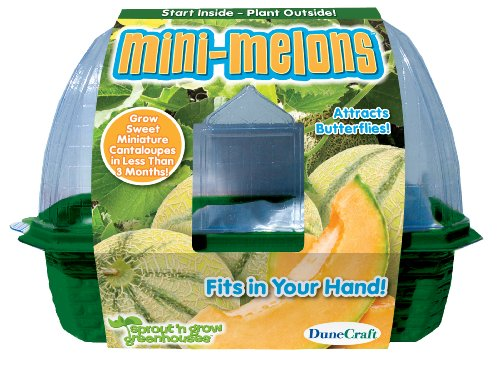 Seed and Plant Kit Plants and Soil Mini-Melons - 2
